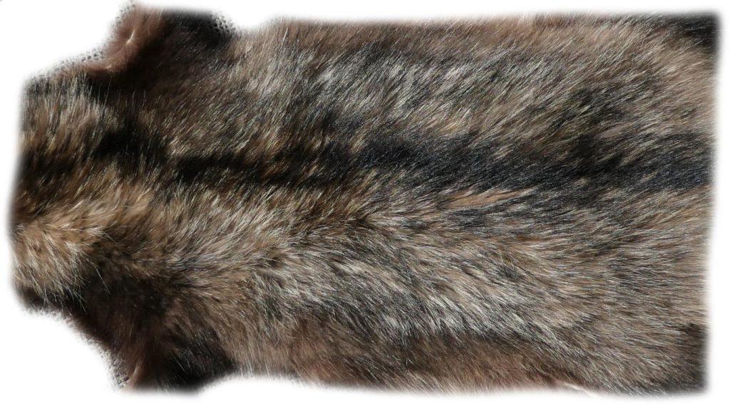 200908 Marderhund 112 cm Rückendetail
