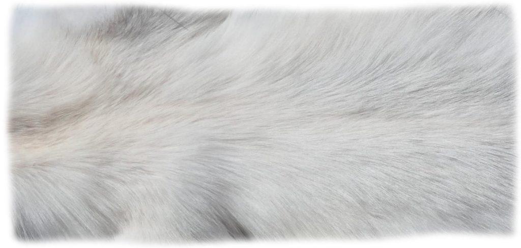 200911 SnowGlowFuchs Rückendetail