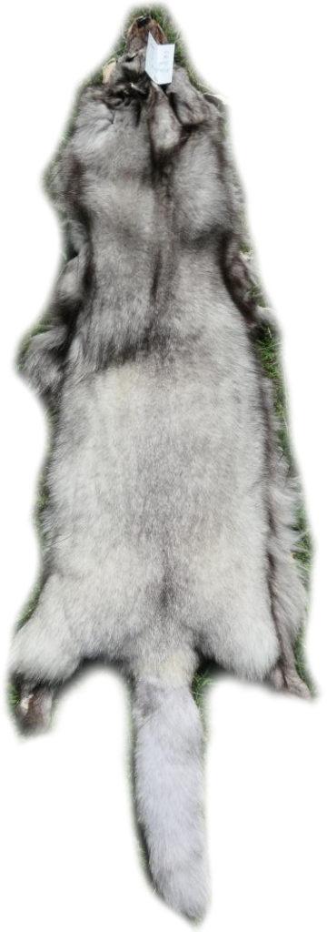 200913 Blaufuchs 131 cm Gesamtansicht h