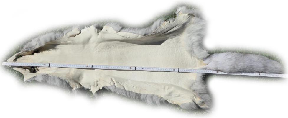 200913 Blaufuchs 131 cm Gesamtlänge