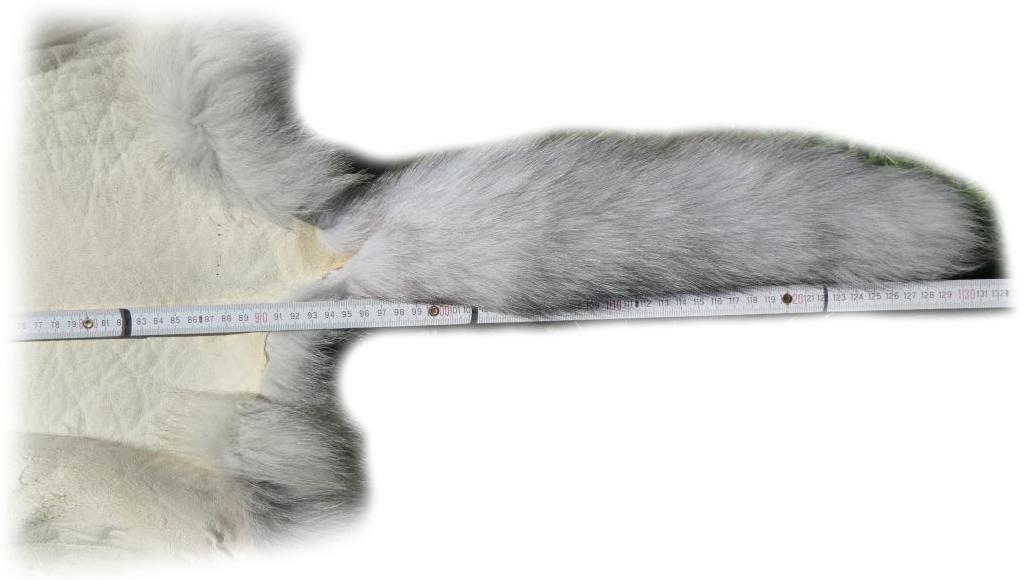 200913 Blaufuchs 131 cm Schwanzdetail