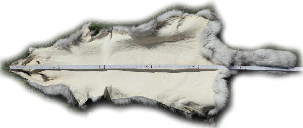 200914 Blaufuchs 126 cm Gesamtlänge
