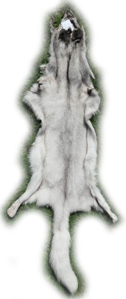 200915 Blaufuchs 155 cm Gesamtlänge h
