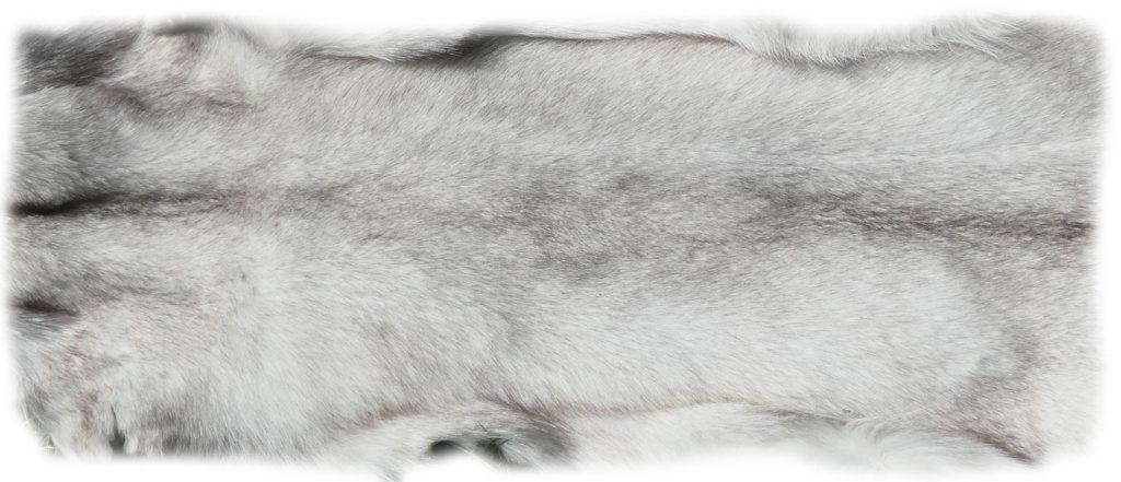 200915 Blaufuchs 155 cm Rückendetail