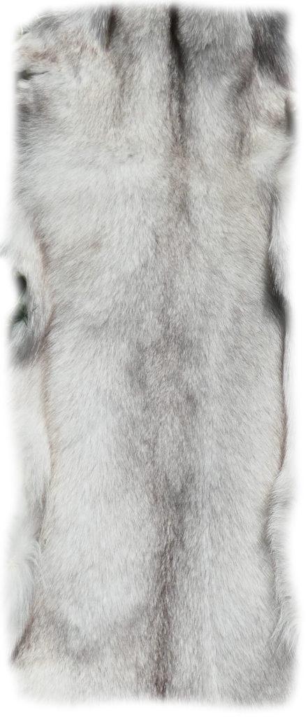 200915 Blaufuchs 155 cm Rückendetail h