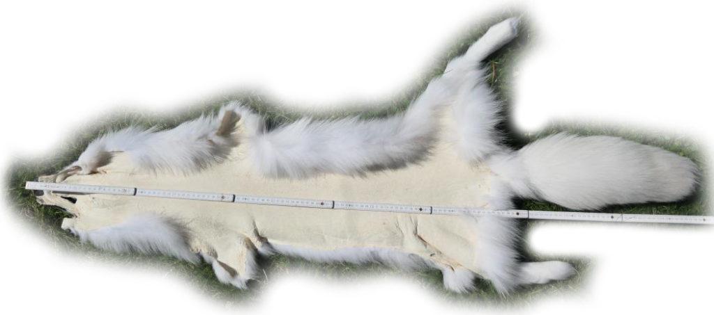 200916 Arctic Marble Fuchs 137 cm Gesamtlänge