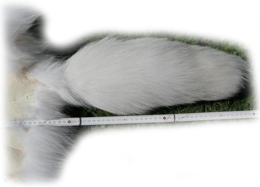 200916 Arctic Marble Fuchs 137 cm Schweifdetail