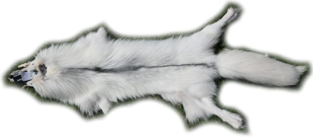 200917 Arctic Marble Fuchs 152 cm Gesamtansicht
