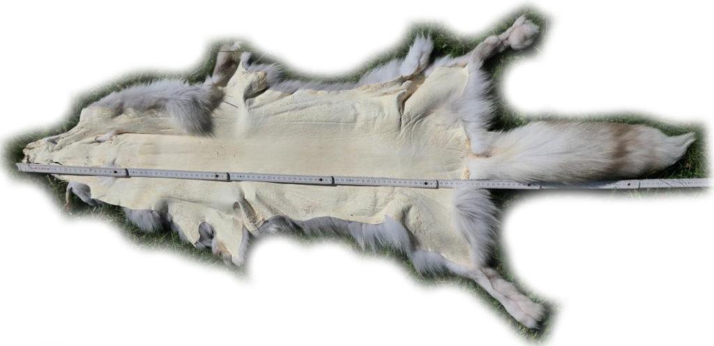 200919 Snow Glow Fuchs 135 cm (2)
