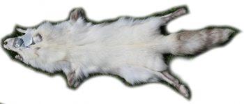 200919 Snow Glow Fuchs 135 cm Gesamtansicht