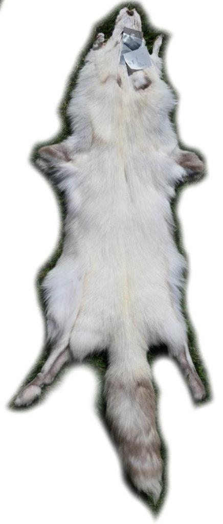 200919 Snow Glow Fuchs 135 cm Gesamtansicht h