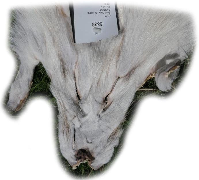 200919 Snow Glow Fuchs 135 cm Gesichtchen