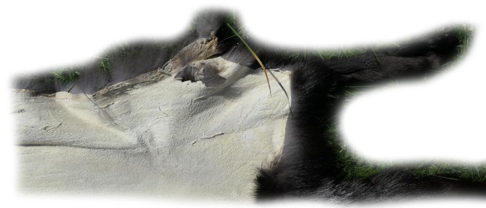 200920 Silberfuchs 137 cm Defekt im Leder