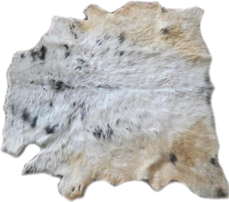 2101226 Highland Cattle Gesamtansicht