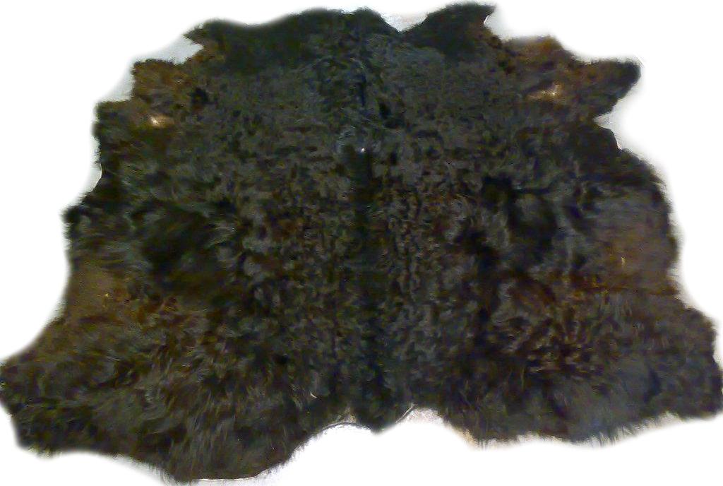 2101279 Galloway schwarz Gesamtansicht b