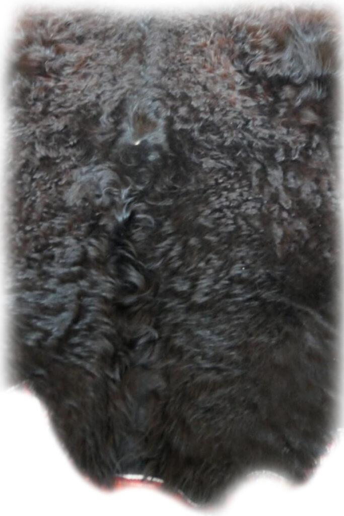 2101279 Galloway schwarz Nackendetail