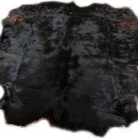 2101300 Schottisches Hochlandrind schwarz Gesamtansicht