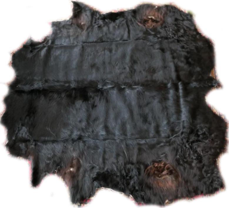 2101300 Schottisches Hochlandrind schwarz Gesamtansicht seitlich