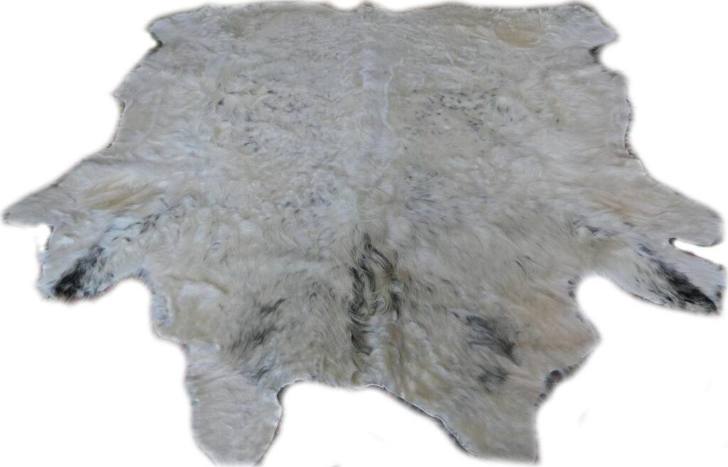 2101940 Galloway weip mit grauen Flecken Gesamtansicht frontal