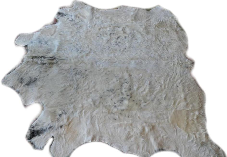 2101940 Galloway weip mit grauen Flecken Gesamtansicht seitlich