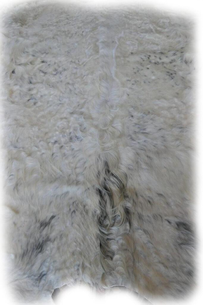 2101940 Galloway weip mit grauen Flecken Nackendetail