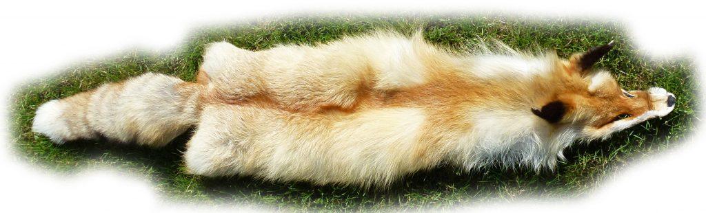 Rotfuchsfell aus Sibirien