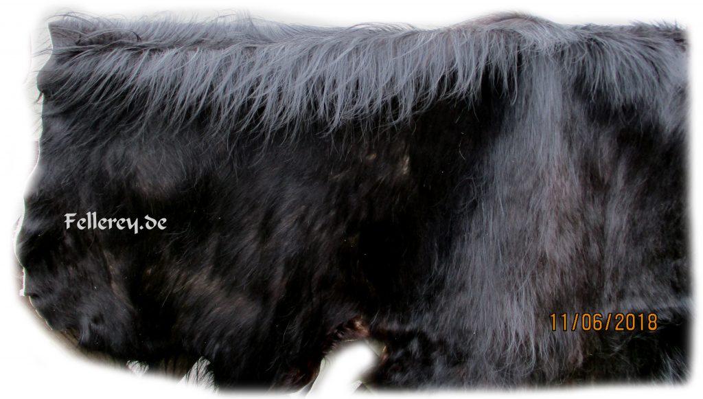 Auerochse Stier Fellbehang