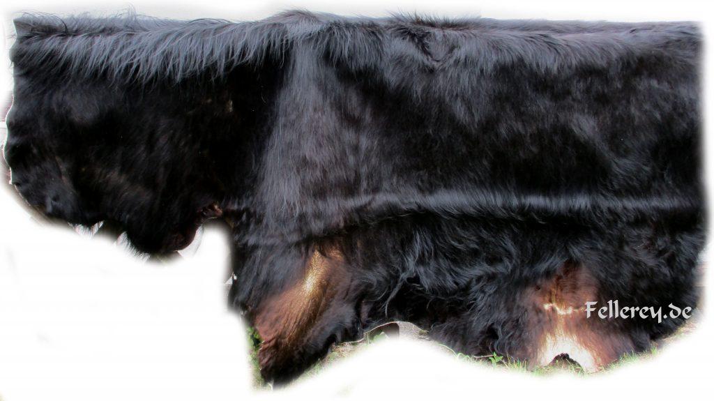 Auerochse-Stier Fellbehang