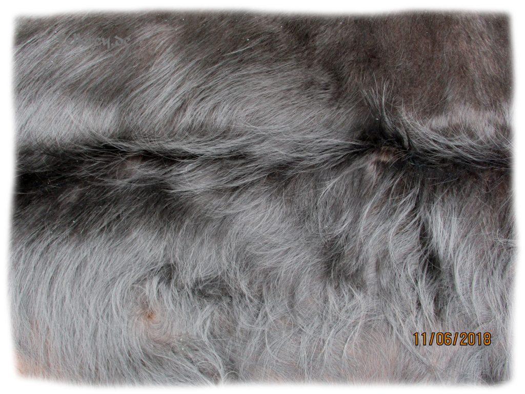 Auerochse Stier Fellseite Felldetail