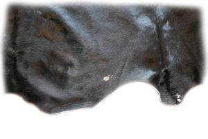 Auerochsenfell Detail