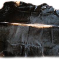 Auerochsenfell Stier Länge
