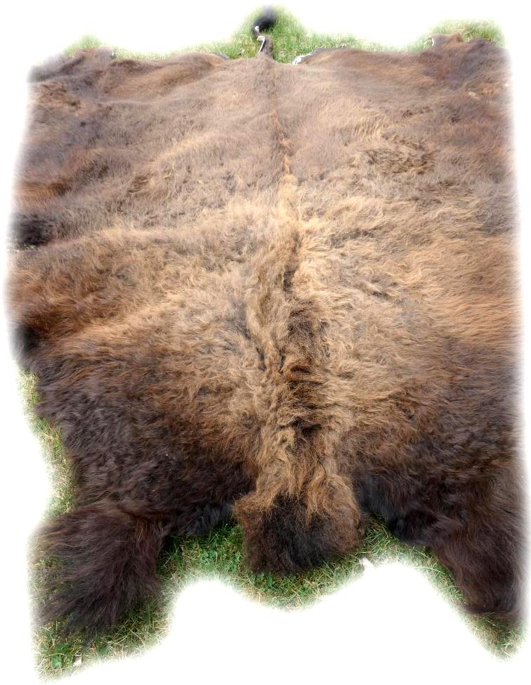 Bisonfell Ansicht von Vorne