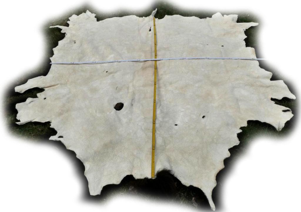 Bisonfell Lederseite