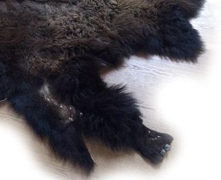 Bisonfell mit Bein und Huf