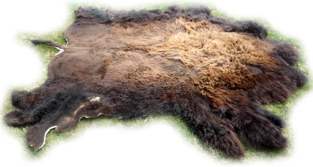 Bisonfell Bulle Ansicht von der Seite