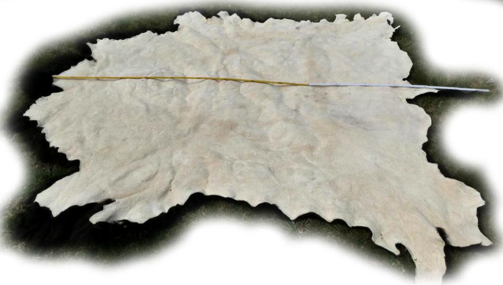 Bisonfell Bulle Gesamtlänge