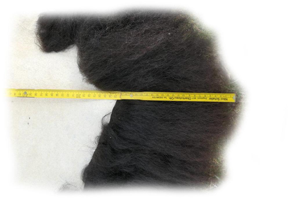 Bisonfell Bulle Haarlänge