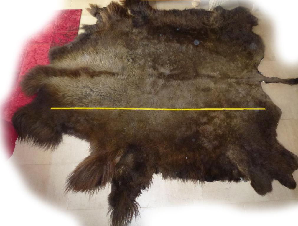 Bisonfell Bulle Länge Fellseite