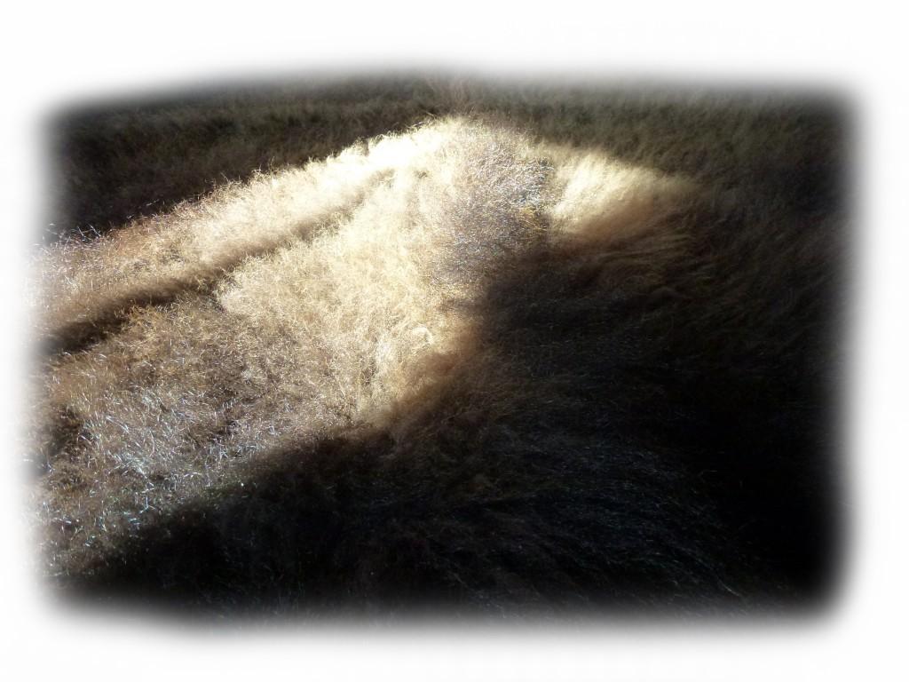 Bisonfell Detail freigestellt