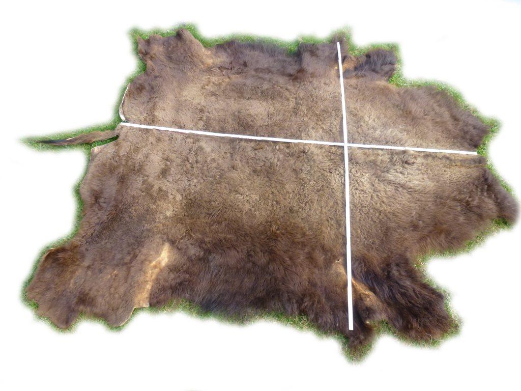 Bisonfell mit Länge und Breite