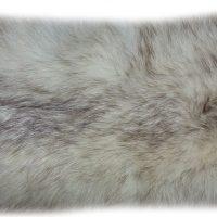 Blaufuchs 12-01 Felldetail