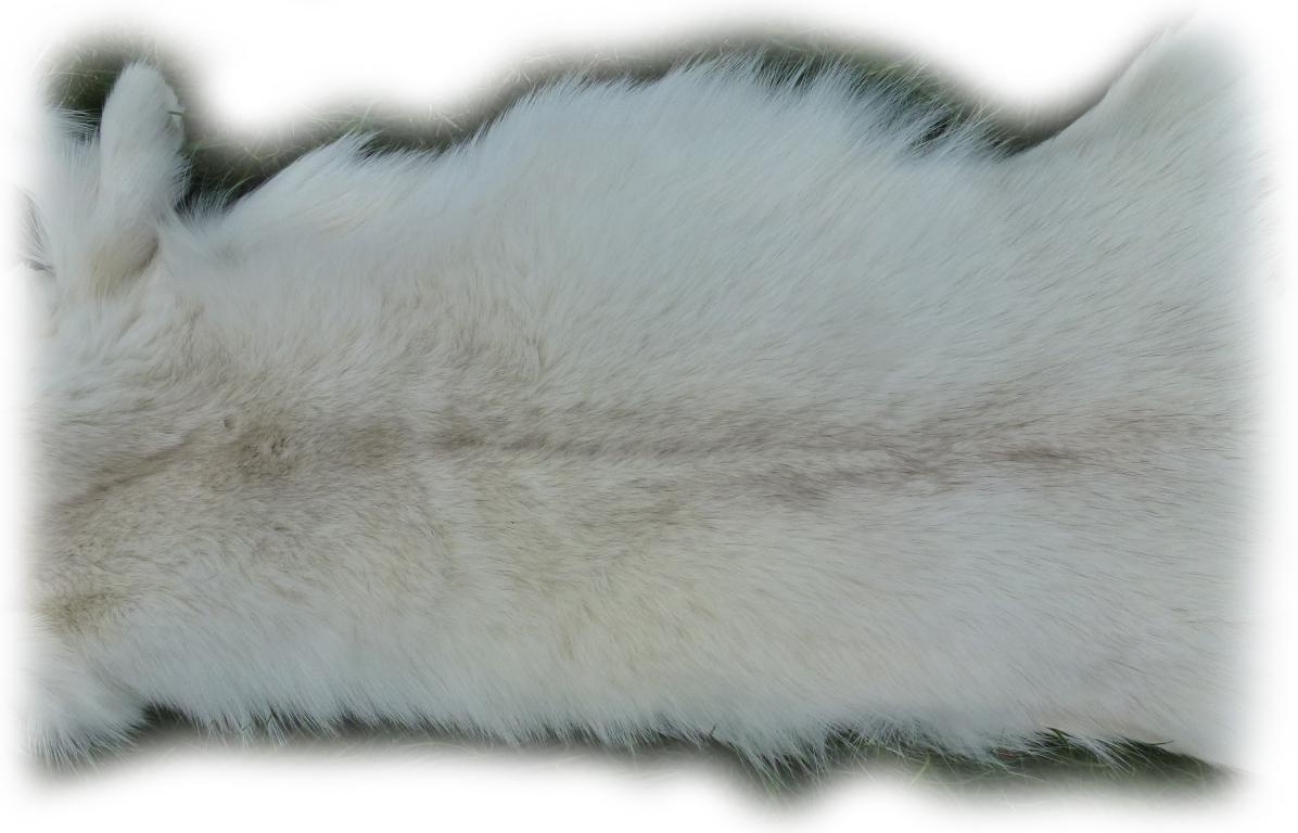 Blaufuchsfell 12 Felldetail