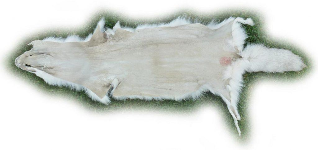 Blaufuchsfell 12 Lederseite