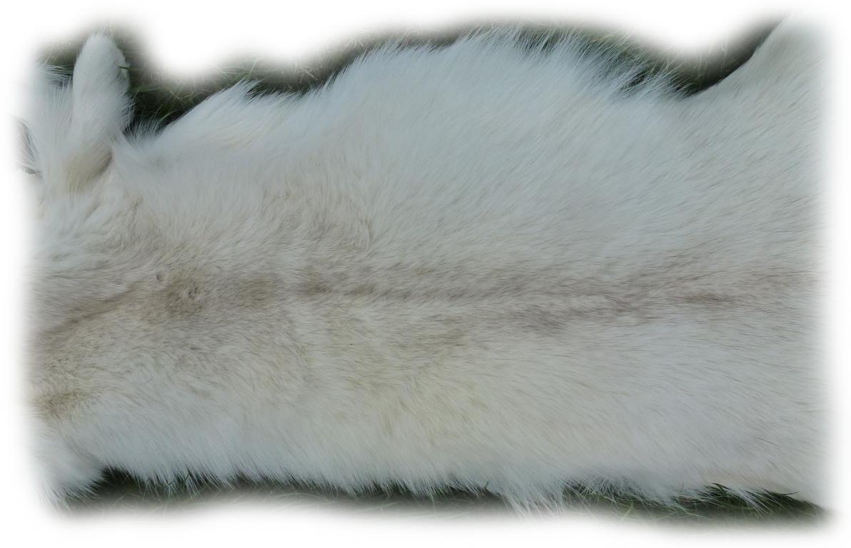 Polarfuchsfell 14 Felldetail