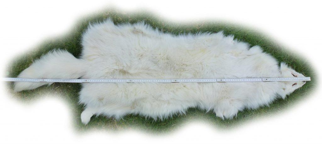 Blaufuchs 14 Längenmaße