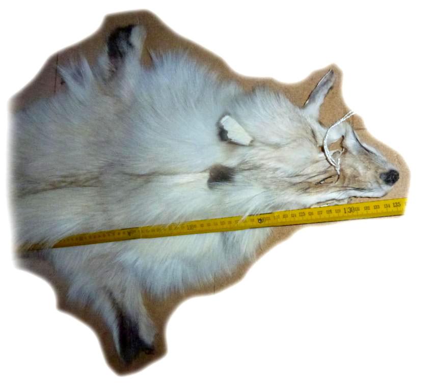 Blaufuchsfell 01 Nackendetail b