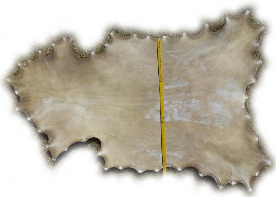 DAmhirschrohhaut-1907070-Gesamtbreite