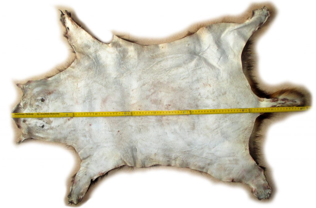 Dachsfell Lederseite mit Maßangaben