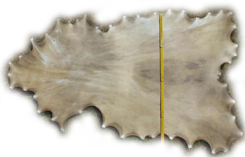 Damhirschrohhaut Gesamtbreite