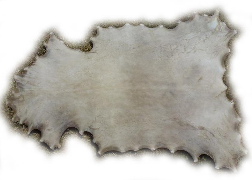 Damhirschrohhaut-Rückseite-1907070